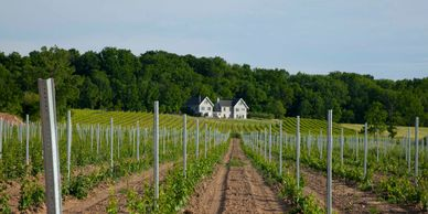 Vineyard picture depicting lastest plantings