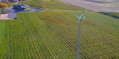 Wind turbine in the vineyards.