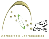 Aamberdell Labradoodles
