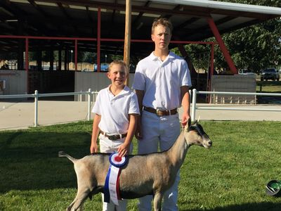 Flora gets her Junior Grand Champion Alpine ribbon.  The first one for our whole herd!!