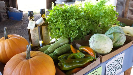 Produce stand with pumpkins, olive oil, green peppers, zucchini, cabbage and lettuce