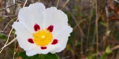 white flower with pink spots and yellow stamen