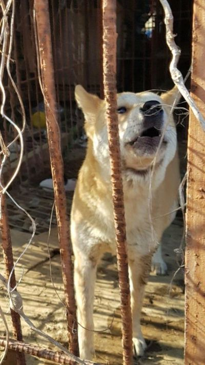 The misery of the dog and cat meat trade