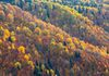 Fall colors in the Caucasus Mountains