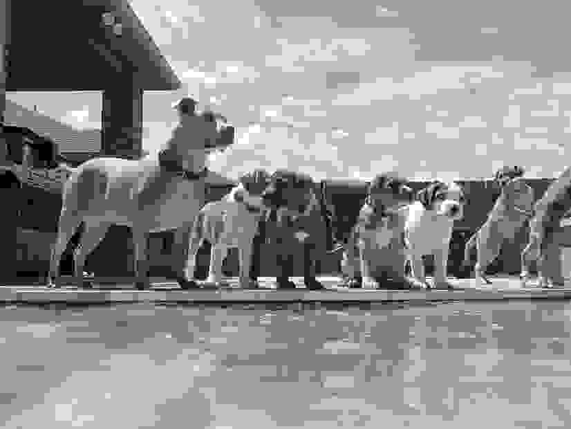 Dogs standing by pool