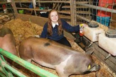 utah junior livetock FFA exhibitor