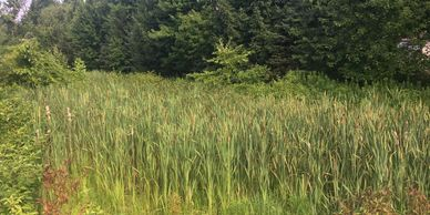 cattails cat tail stormwater retention pond basin management Pittsburgh pa commercial hoa community