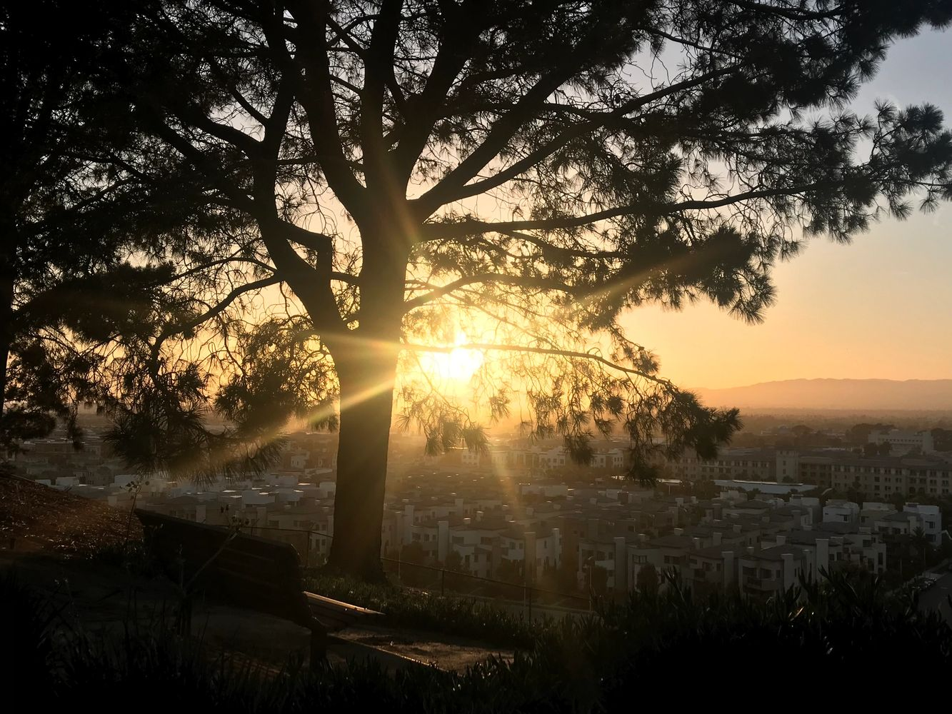 Sunset over Los Angeles, through tree branches.  Love Laughter Loss Home Page. Grief