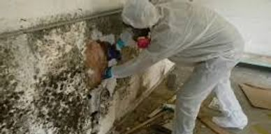 MD Restoration Mold Damage Mold remediation picture