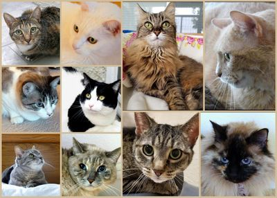 Check out our adopted cats on our You-Tube Channel.