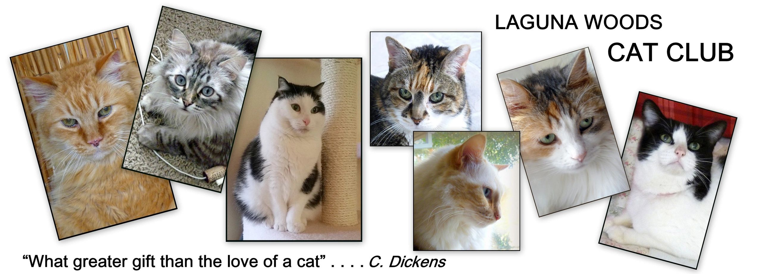 collage of favorite adoptee cats .. a saying: What greater gift than the love of a cat . c. dickens