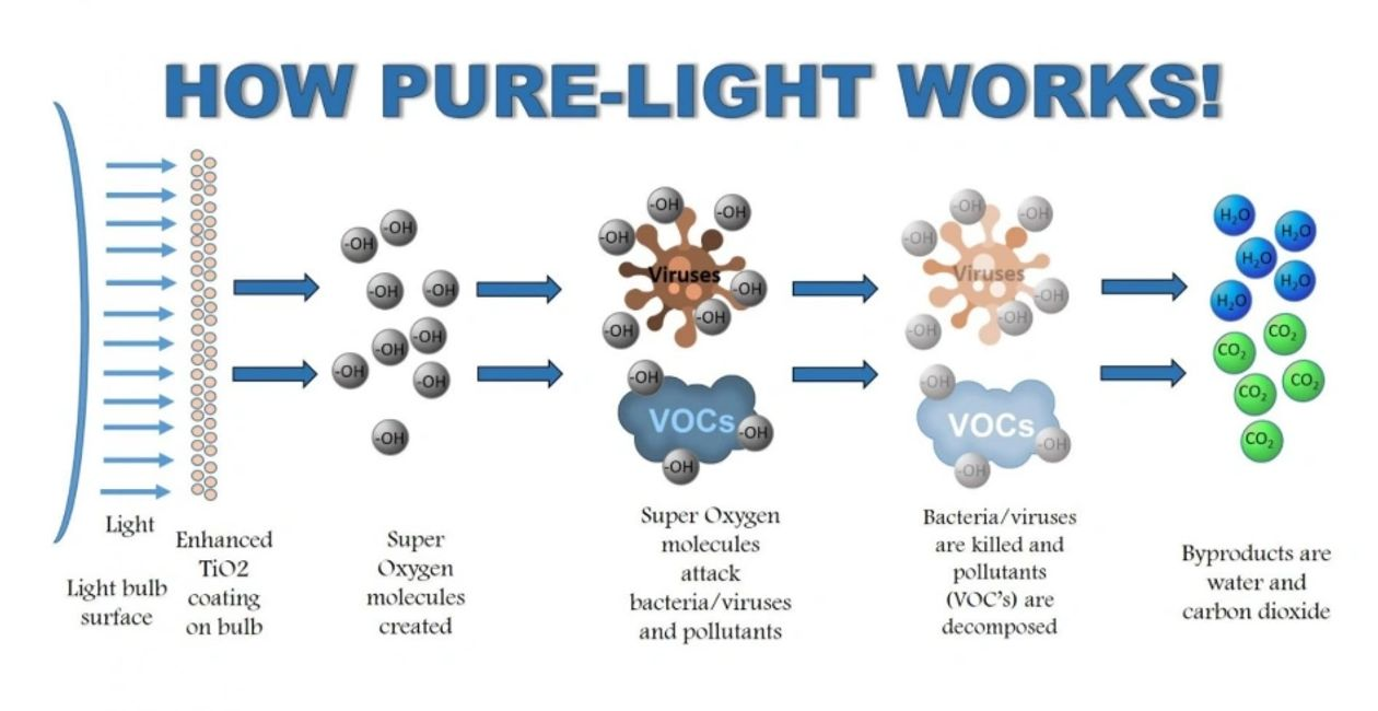 pure-light bacteria and mold killing light bulbs