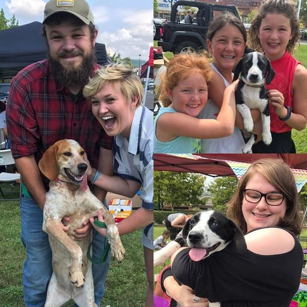 A collage of three families smiling and holding their newly adopted dogs!