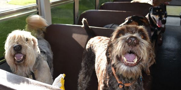 Various dog breeds in bus seats.