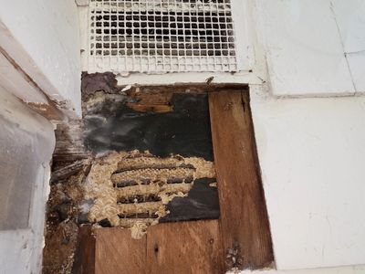 Touch to contact Jeffrey for Yellow Jackets like treated in this KC, MO rental house.