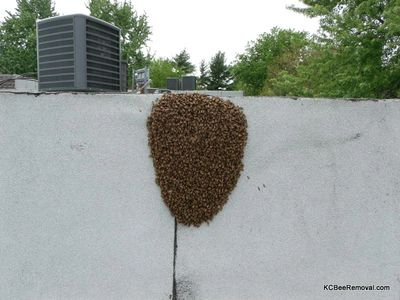 Bees hanging out on building.  Contact Jeffrey now to save bees in KS or MO.