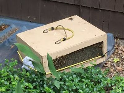 Screened box used for saving the bees. Contact Jeffrey now to save bees in KS or MO.
