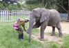 Friends until the end, Fidelis works together with Kura in Free Contact at Zimbabwe Elephant Nursery.