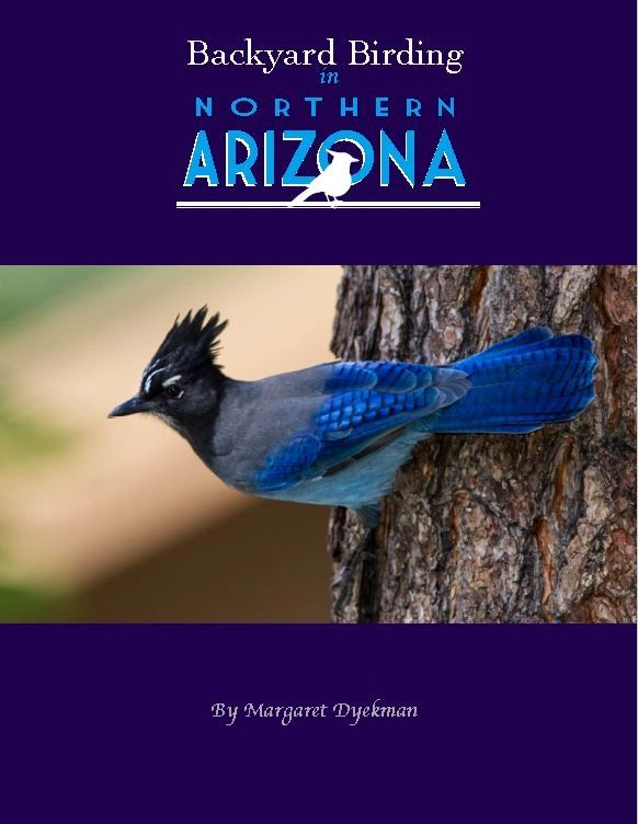 Backyard Birding, Northern Arizona, Steller's Jay