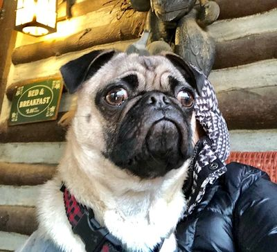 Gus is a regular visitor to the Nestled Inn. He loves that we are pet friendly!