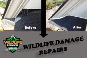 wildlife damage repairs