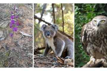Threatened Species, Ecologist, Biodiversity Development Assessment (BDAR) and Flora & Fauna Report