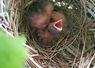 I found these baby birds in a nest in our field.  How sweet this new life shared in our berry field!