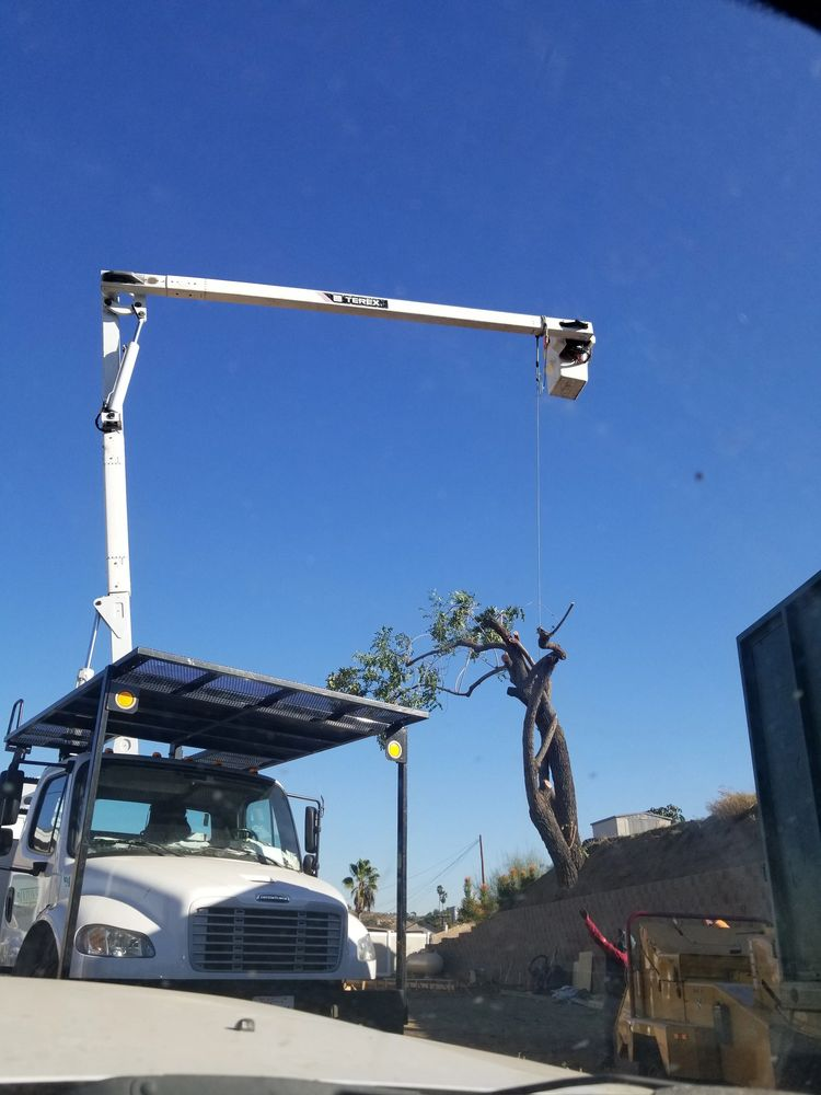 Tree Service near me? I'm glad that you found the most efficient and fair priced tree service around