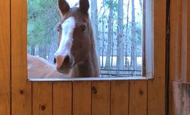 Pinchona Farm - Horse Boarding, Horse Riding Lessons