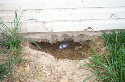 The family dog discovered there was no foundation work.