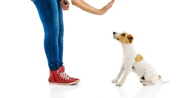 How To Start A Career As A Dog Trainer Seminar - Have you ever wondered how people become dog traine