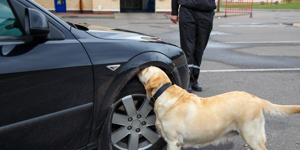 Intro to Nose-Work (Exterior) dogs will introduce exterior searches