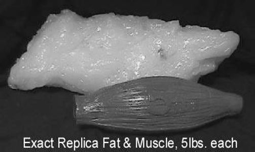 The reason the scale goes up?  Muscle is more dense and takes up less space...