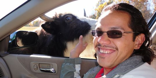 Smiling man with sunglasses touching a large steer with brown eyes