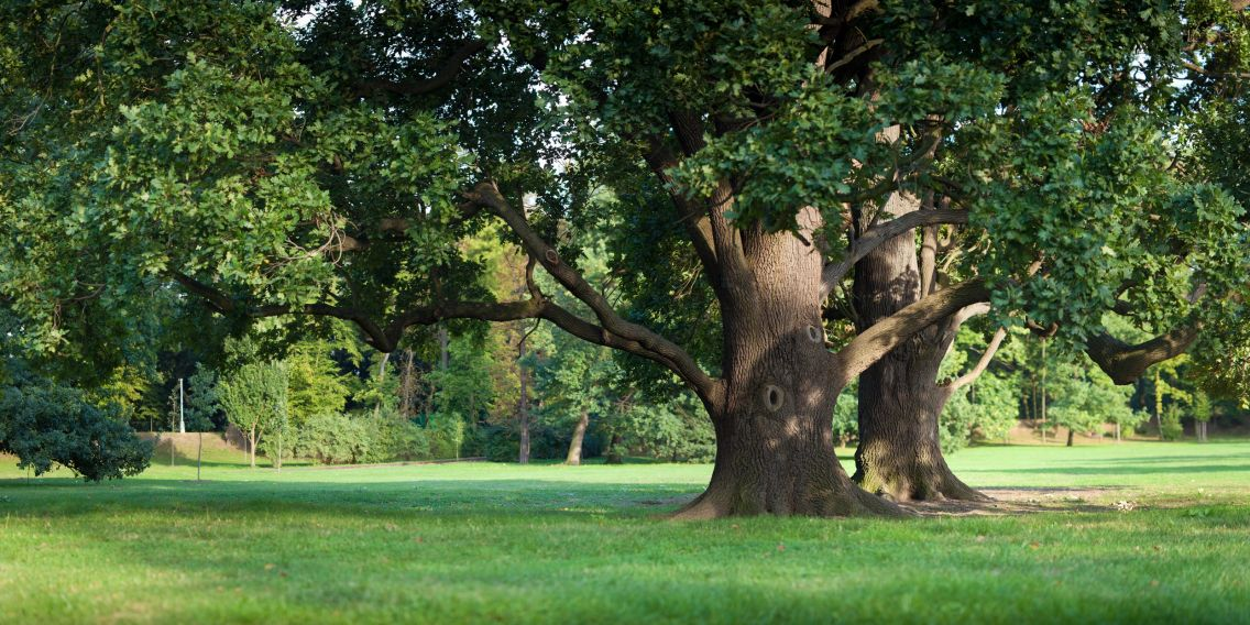 aaa tree service tree service in sacramento folsom california. Black Bedroom Furniture Sets. Home Design Ideas