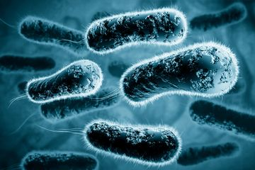 Stanford Continuing Studies Gut Bacteria in Health and Disease online course