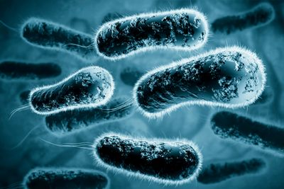 Salmonella can cause post-infectious IBS, post-infectious Reactive Arthritis
