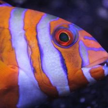 Value Pet Center Exotic Live Fish, Birds, Animals, and Reptiles from around the world.