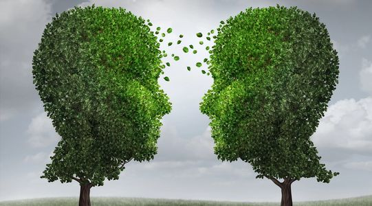 Two trees in the shape of heads sharing foiliage. Rooted stable sustainable change