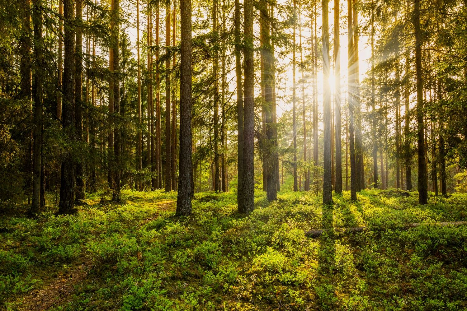 Forest touched by sun rays