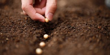 organic seed treatment, biological seed treatment, effective organic seed treatment root growth