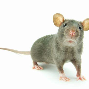 Silver Pest Services - Pest Control, Termites, Roach