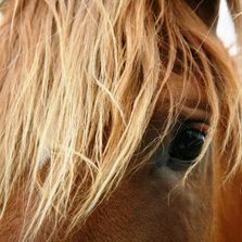 Big Red Mare Equestrian Red Highlights Blog