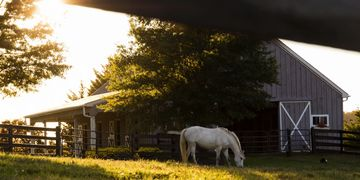 I see a place where rescued horses can learn what it means to be safe and find comfort.