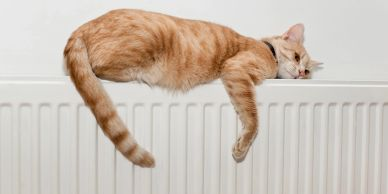 Cat resting on a radiator