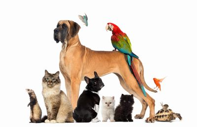 ZenCat can see other species. Call us to see if we can help your other pets.