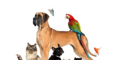 bird sitting, small animal sitting, house sitting, dog walks dog hikes private dog walks dog walk,