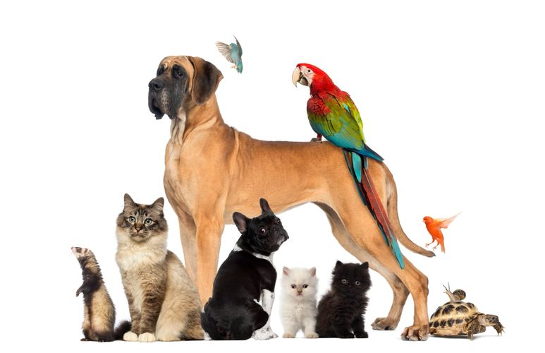 Pet sitting dog cat puppy kitten bird