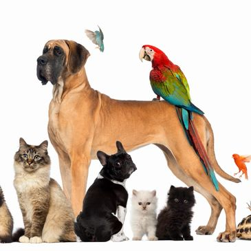 Atascocita Kingwood Humble Pet Sitters Tracy Bradley Absolutely Animals Pet Sitting
