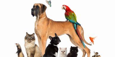 Almost Home Pet Rescue